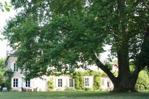 Platane de 250 ans aux jardins de forgeneuves de coulanges les nevers